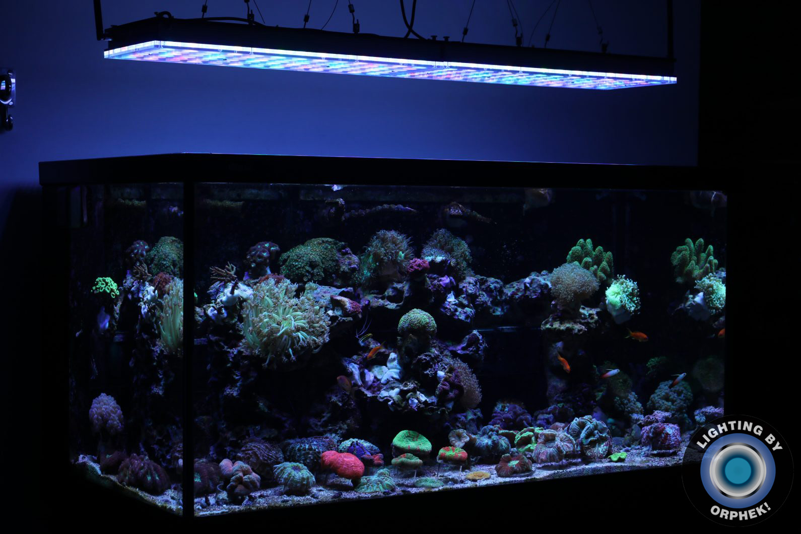 beautiful aquarium reef lights