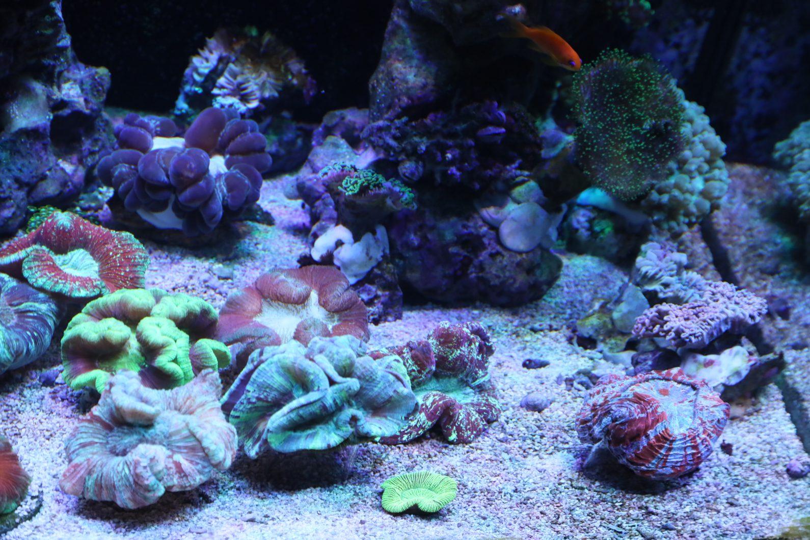 best reef tank corals lighting