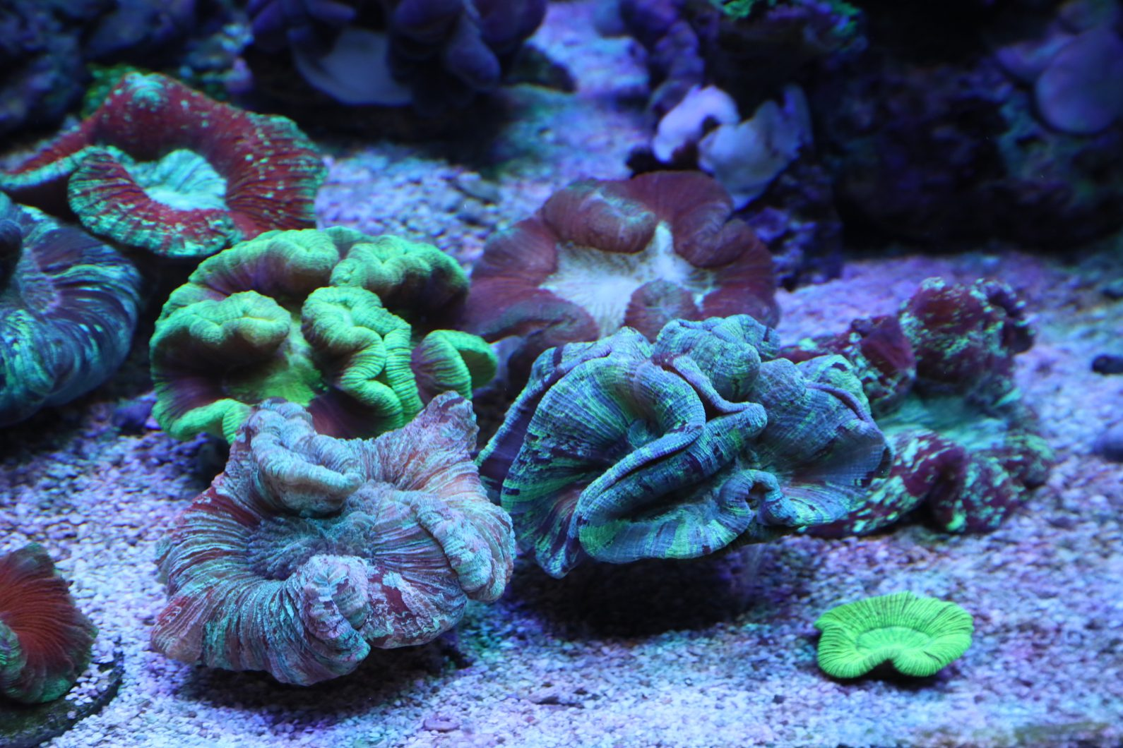 Oświetlenie led rafy koralowej 2020