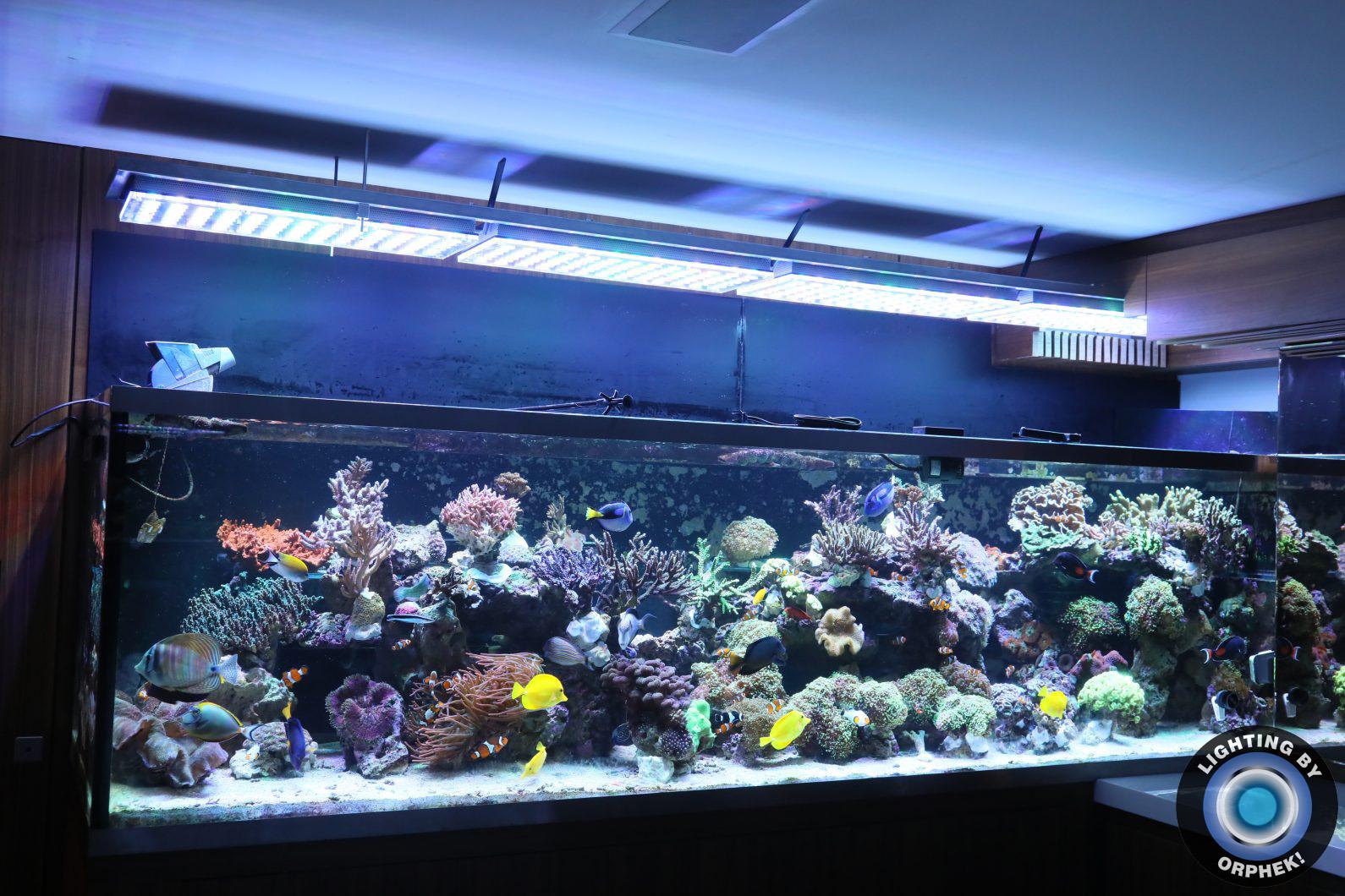 public reef aquarium best lights