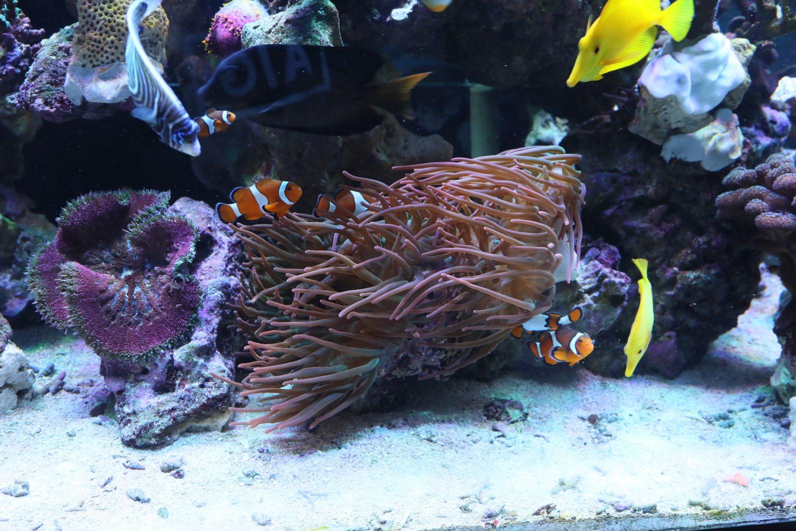 2020 oświetlenie LED wzrostu raf koralowych
