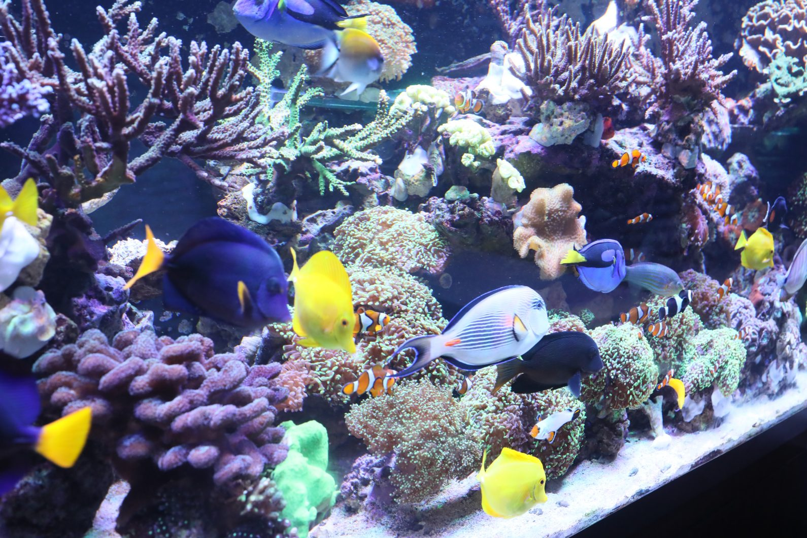 najwyższej jakości diody LED zbiornika koralowego