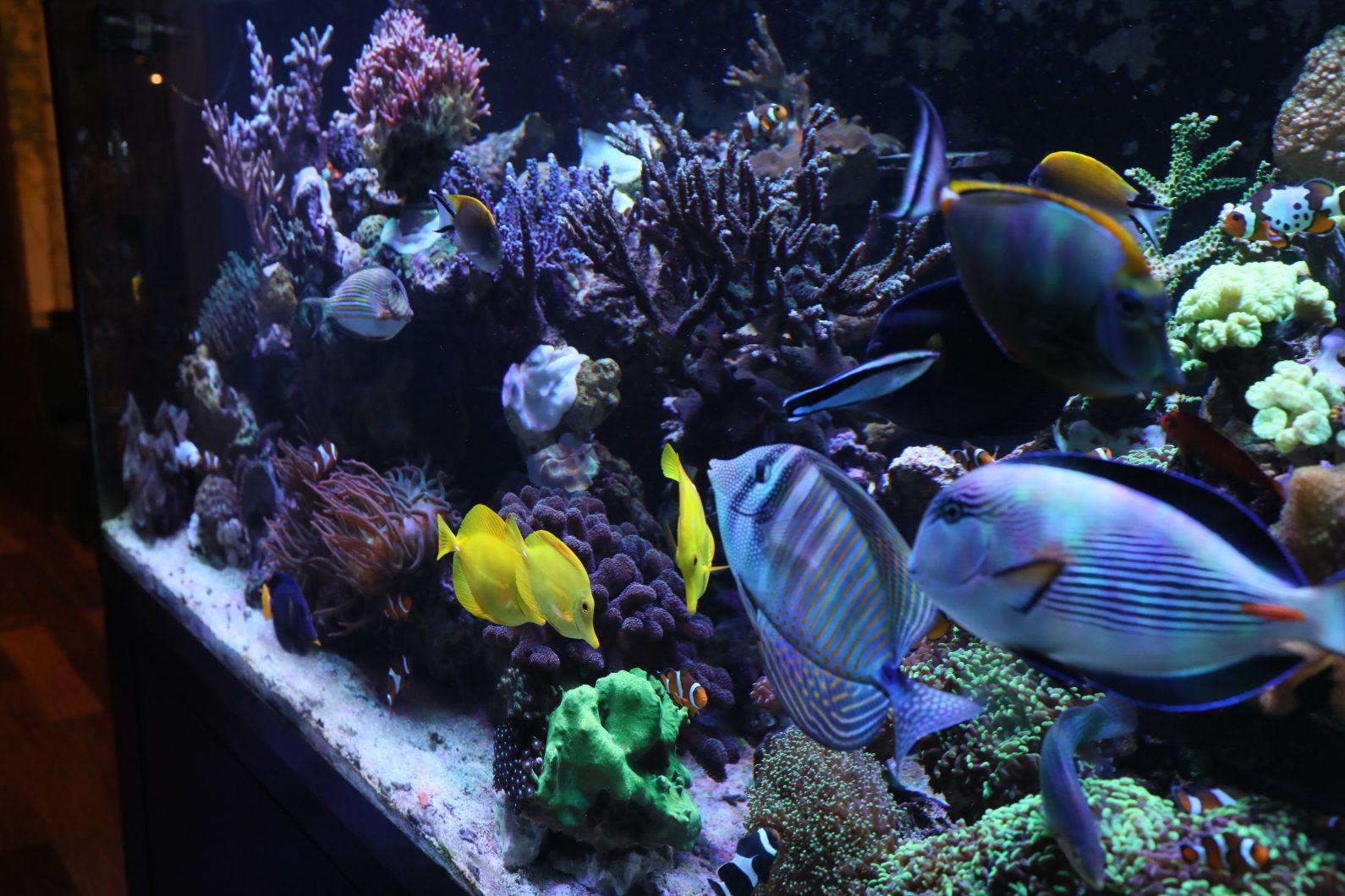 najszybsze oświetlenie led rafy koralowej
