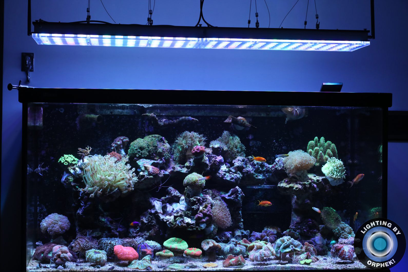 atlantik v4 best public tank LED