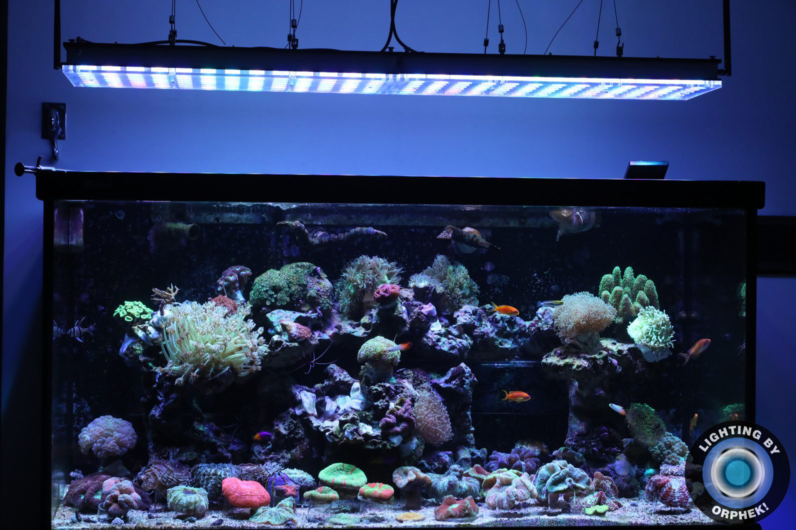 orphek atlantik best reef tank LED