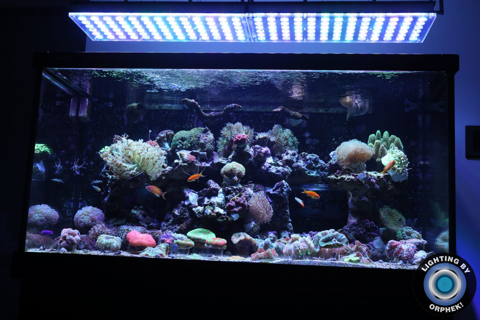 best lights for amazing reef tank