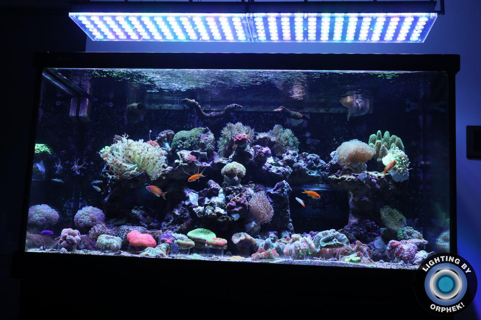 najlepsze światła dla niesamowitego zbiornika rafy