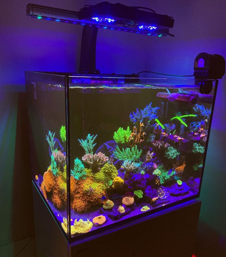 Orphek OR3 LED light Coral pop