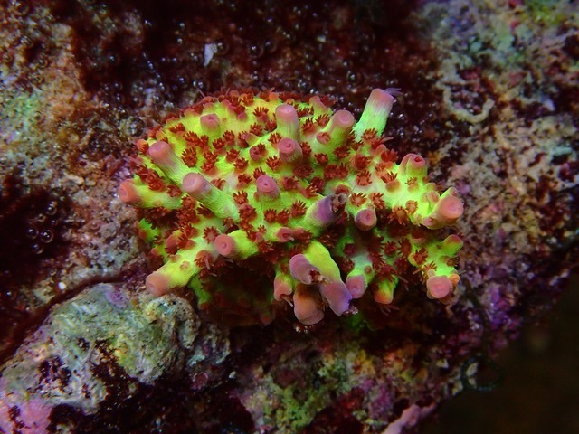 terumbu karang merah muda hijau merah muda