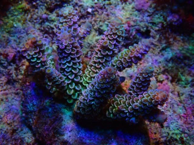 tangki karang yang luar biasa indah