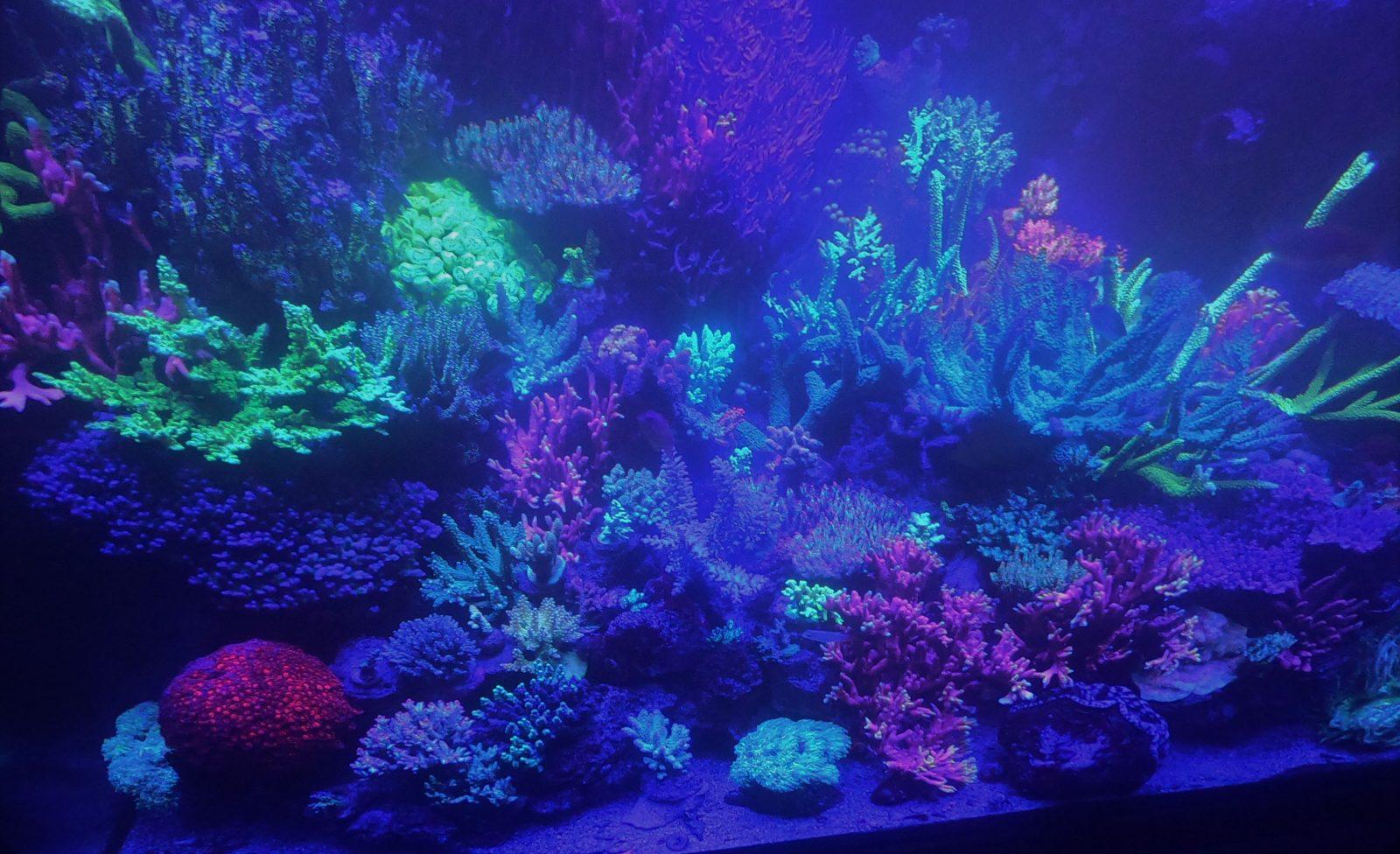 화려한 암초 산호 탱크