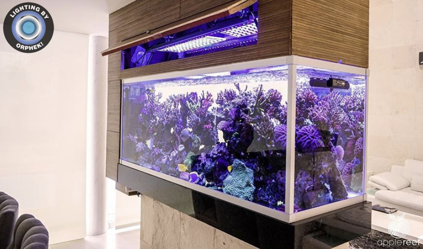 Reef Aquarium in living room display