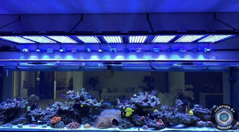 orphek led lighting foot deep aquarium