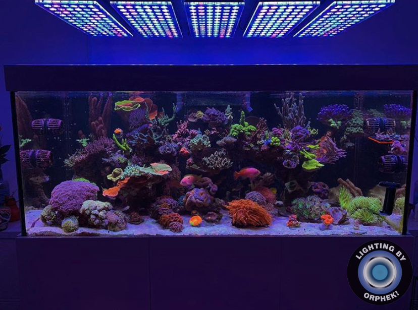 orphek atlatnik mejor tanque de coral LED