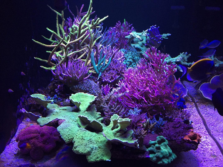 atlantik v4 meilleur corail élèvent la lumière LED