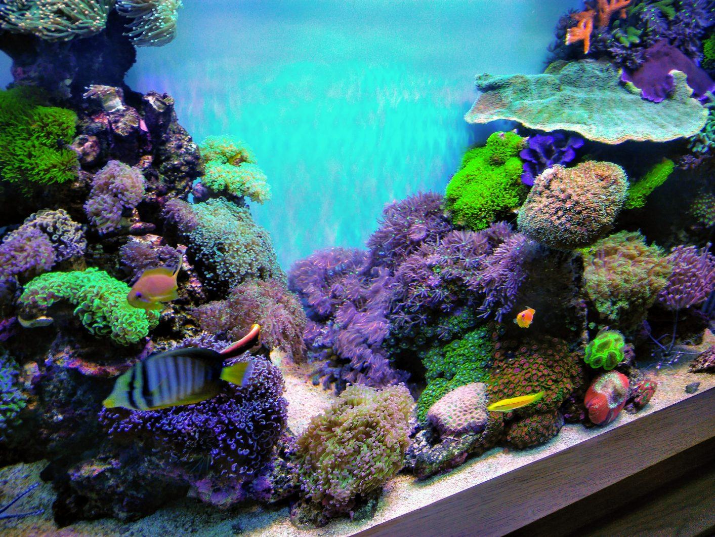 顶级珊瑚礁LED灯