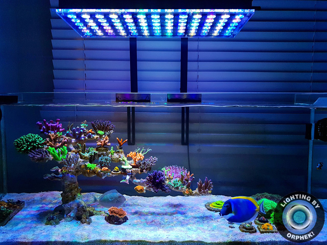 Orphek Reefscaping Showcases Beautiful tanks