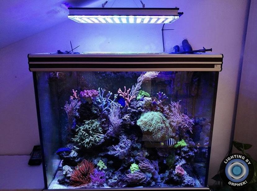 hermosa iluminación del tanque de arrecife
