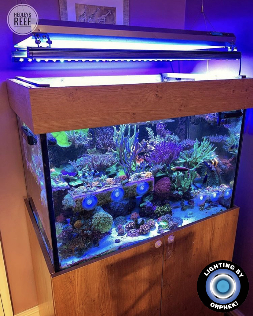 beste reef tank led strip