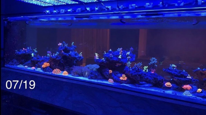 atlantik v4 najlepszy koralowy pop led światło