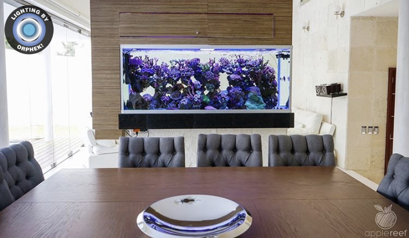 Reef Aquarium in dinning room display