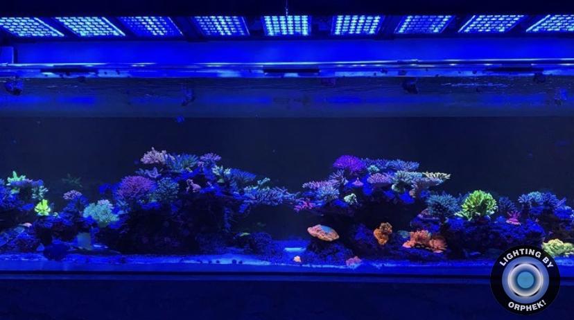 2021 mejores luces LED de tanque orphek
