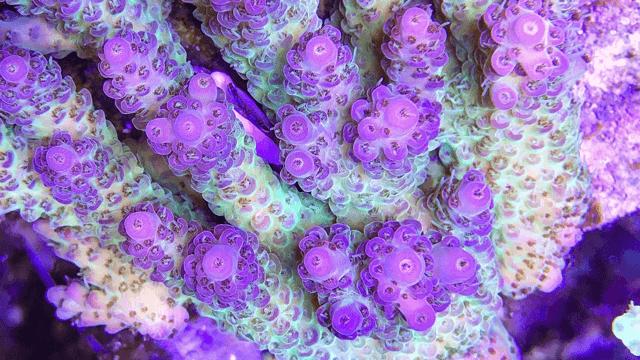 2020年珊瑚礁水族馆最佳LED