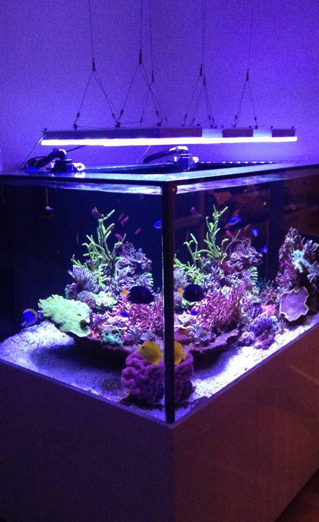 coraux de réservoir de récif coloré