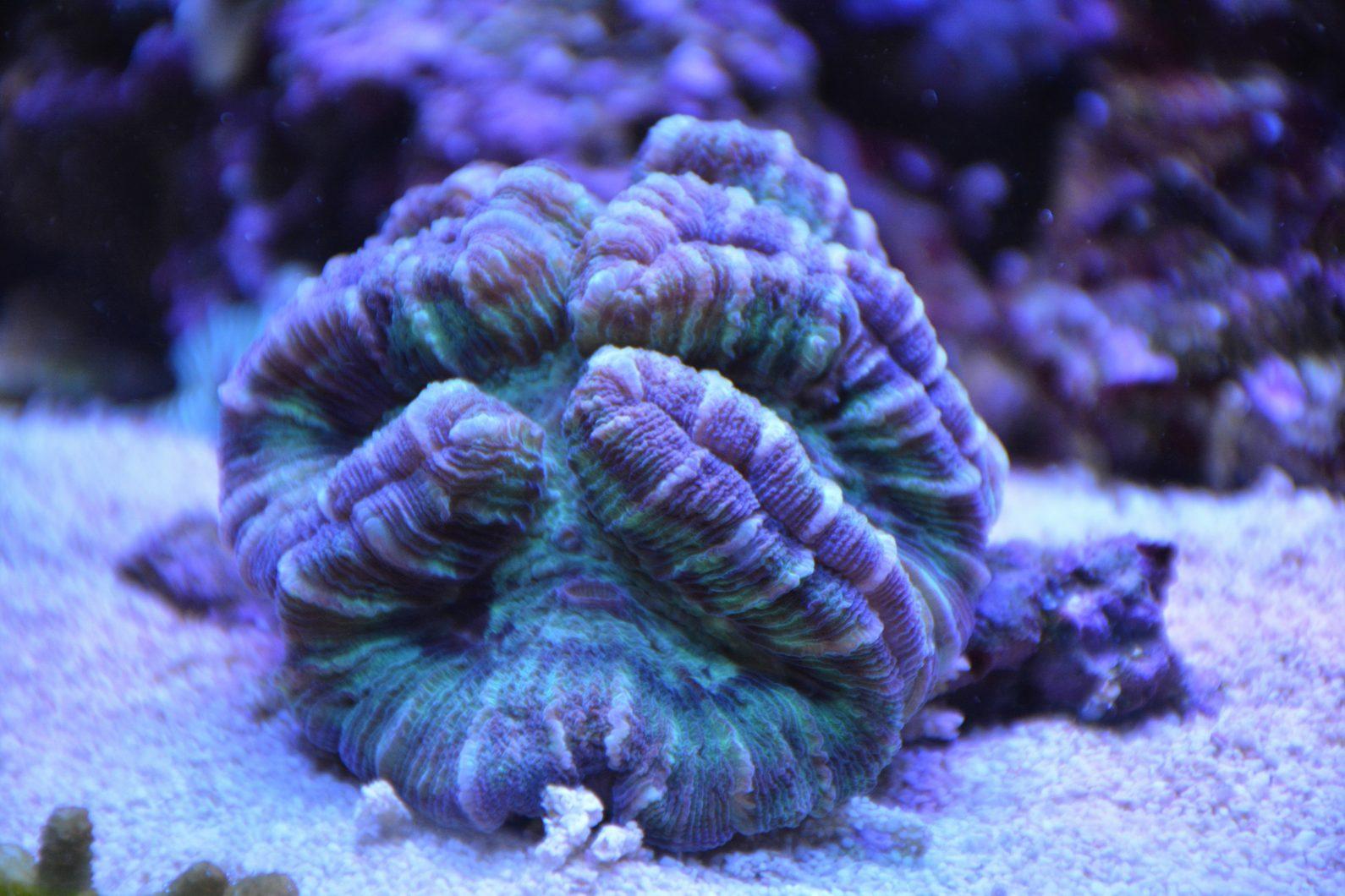 2020 mejor iluminación del acuario de coral