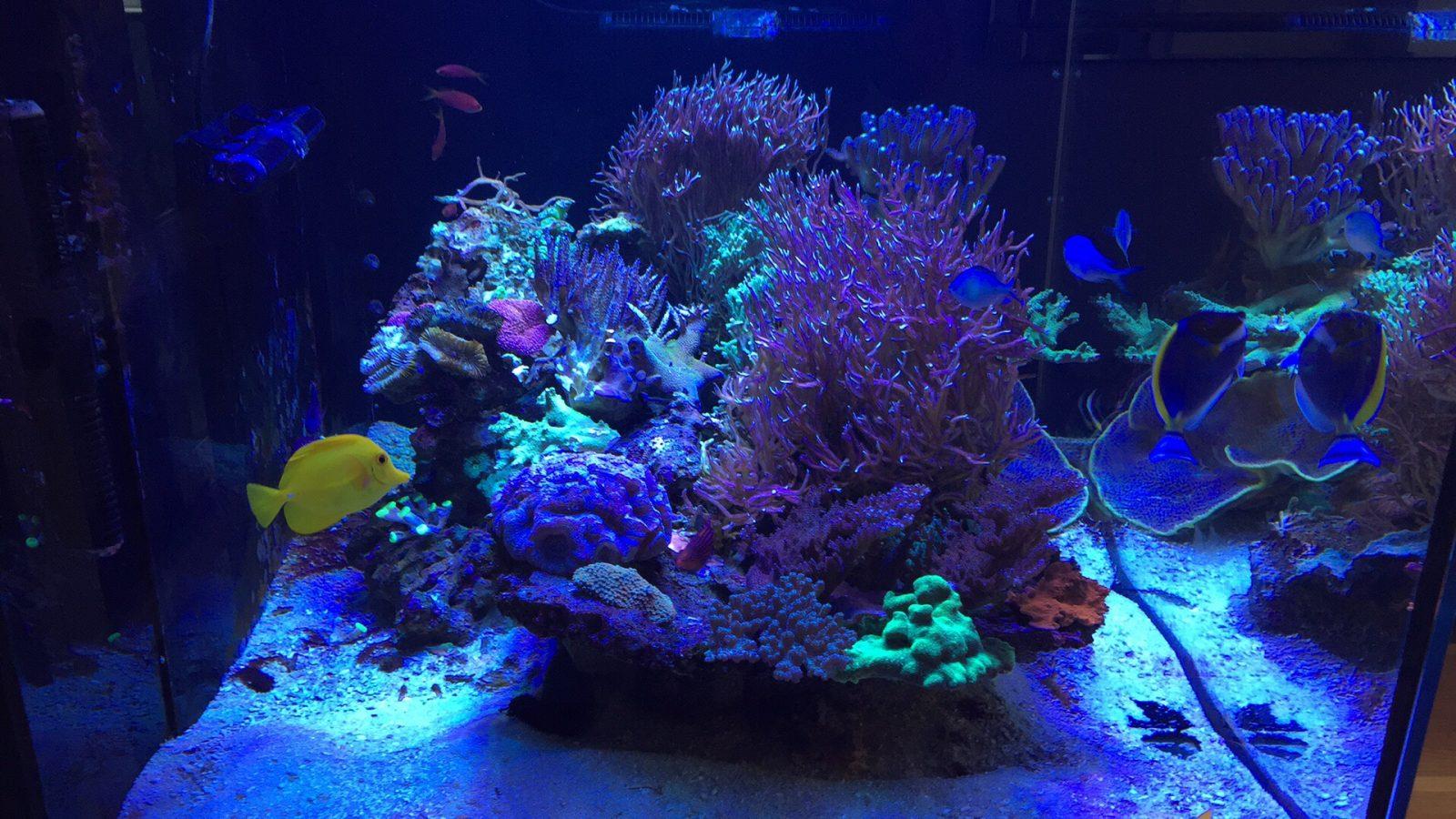 récif coraux royaume meilleur led lumières