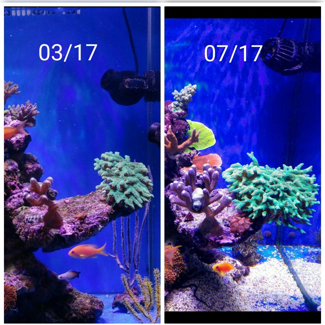 ορφανό atlantik καλύτερο LED ανάπτυξης κοραλλιών