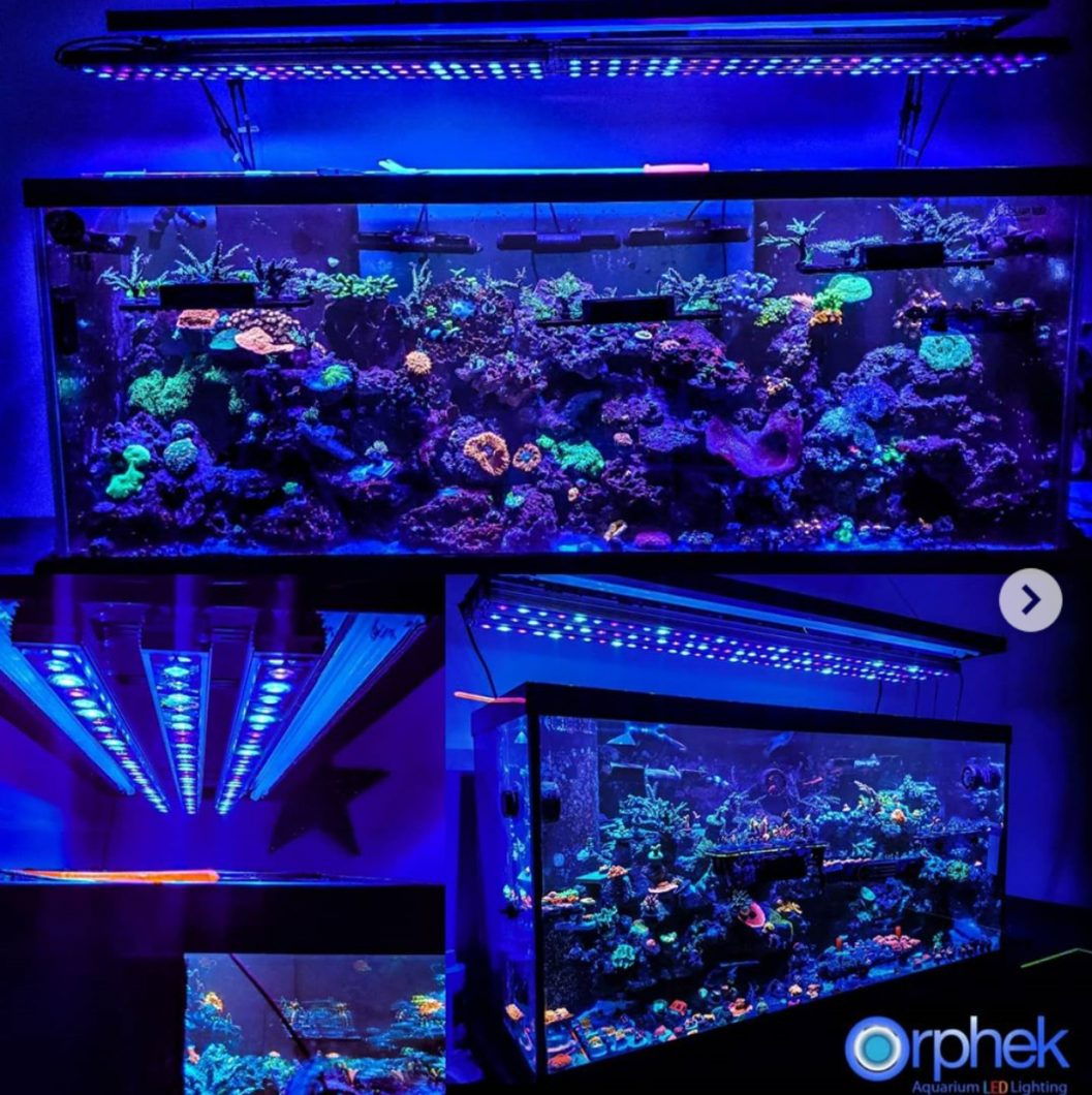 OR3 LED reef bars gallery