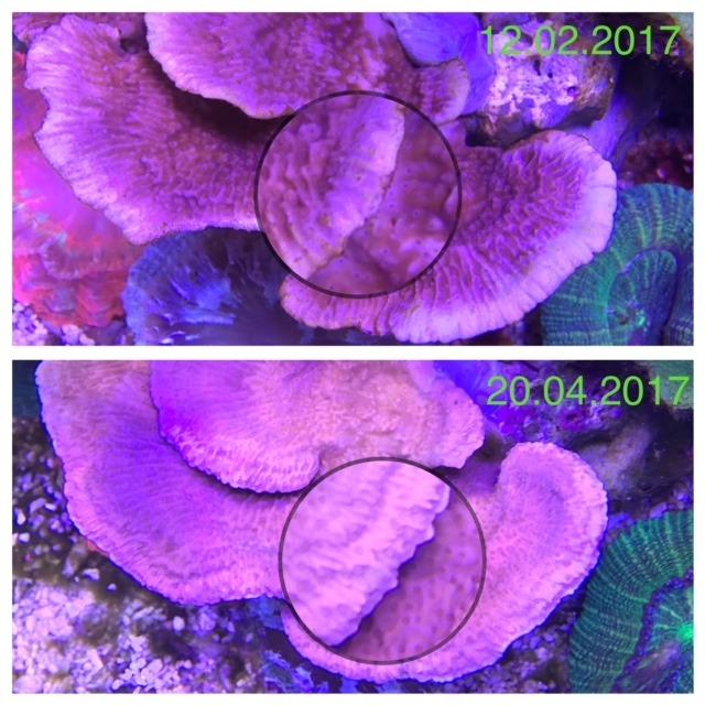SPS珊瑚流行的最佳LED 2020