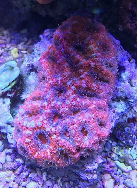 colorido arrecife tanque coral