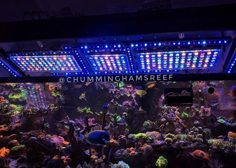 reef tank's best led lighting 2020