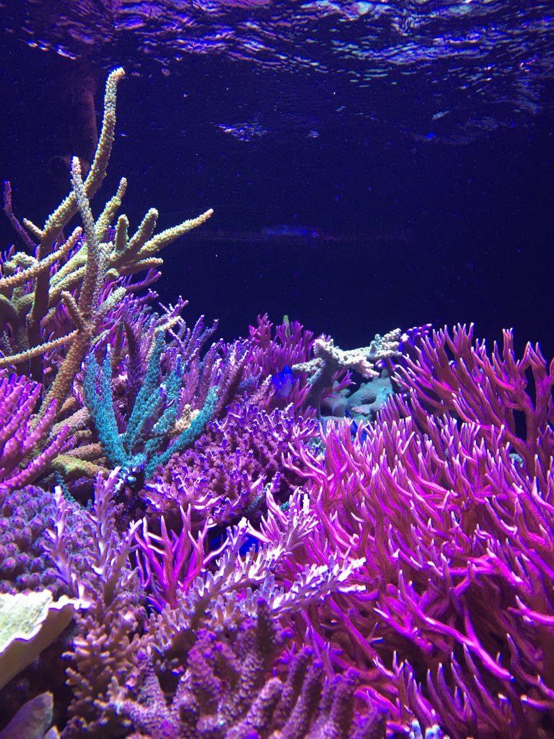 meilleures lumières d'aquarium de coraux de récif