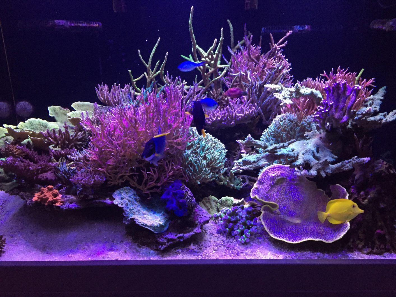étonnantes lumières pop corail orphek atlantik