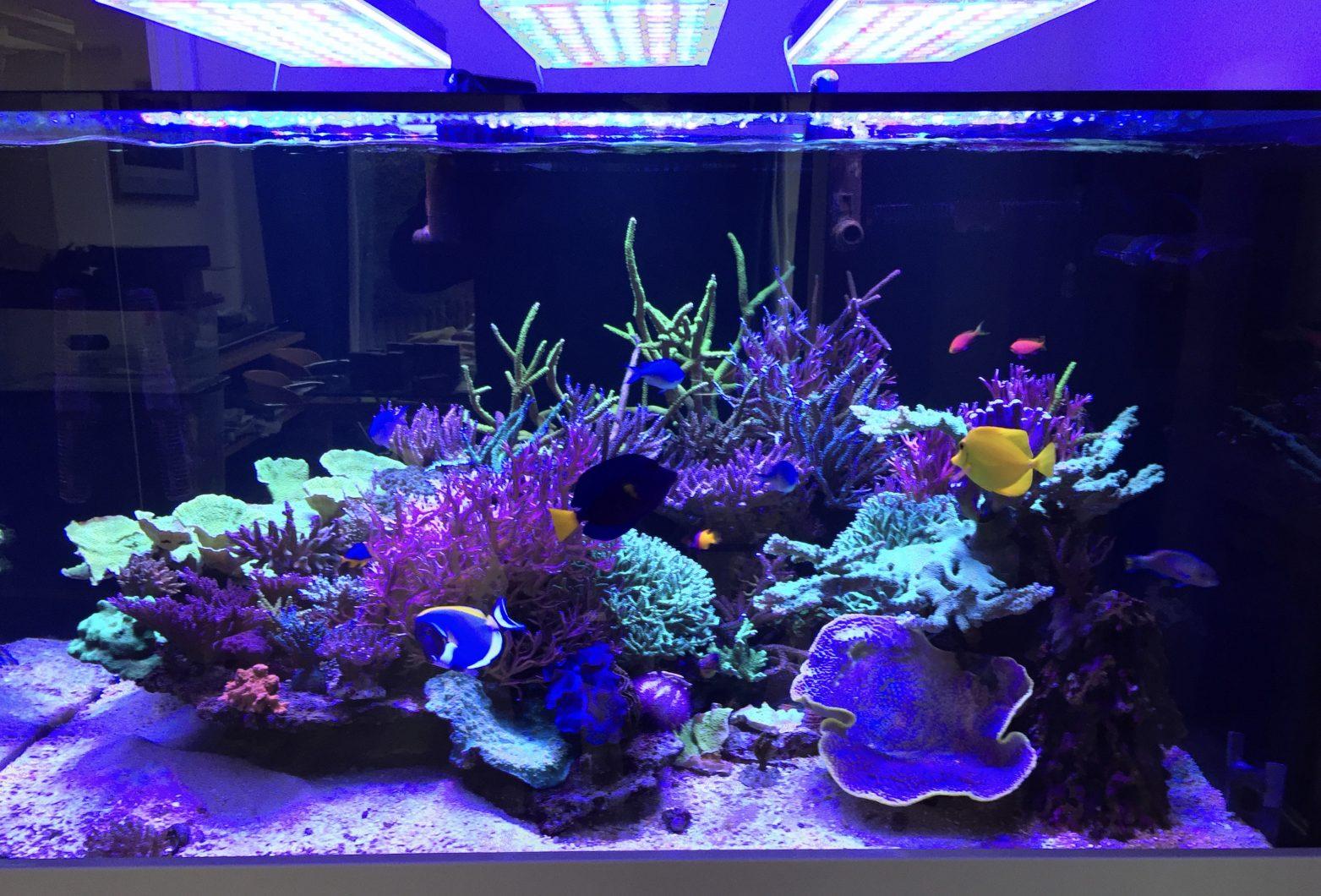 beau réservoir de récif meilleur éclairage