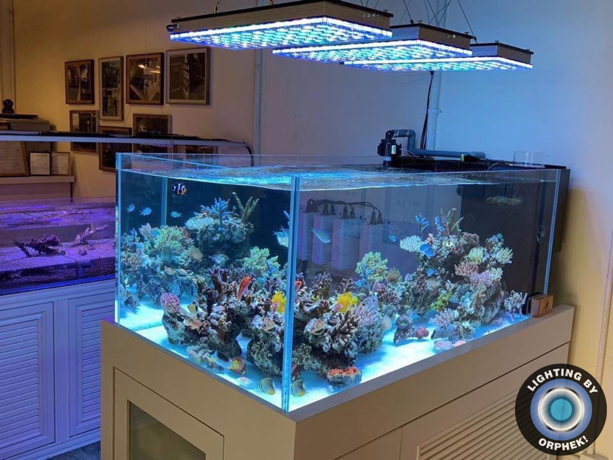 3 Atlantik V4 Gen 2 aquarium display