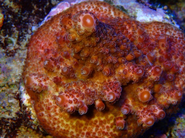 tangki terumbu karang pop menakjubkan