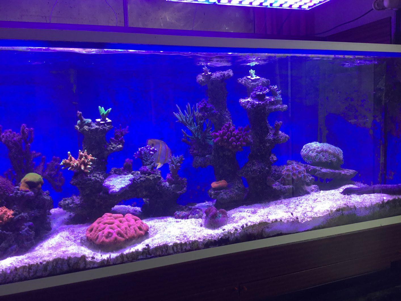fantastisk korallpop under orphek atlantik