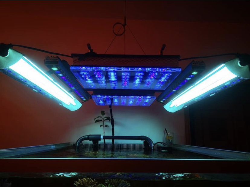 orphek atlantik beste akvarium LED