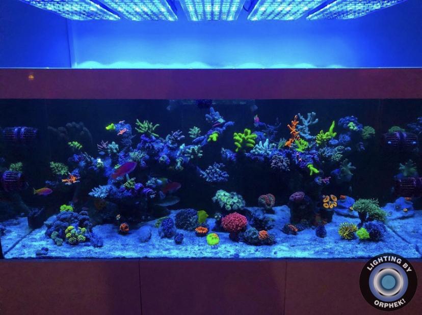acuario de arrecife mejor iluminación pop coral
