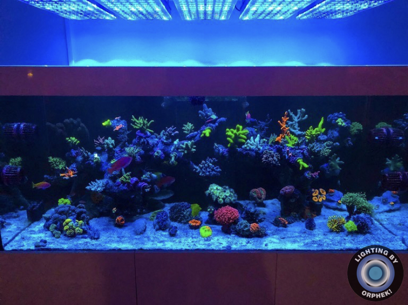terumbu karang pencahayaan pop karang terbaik
