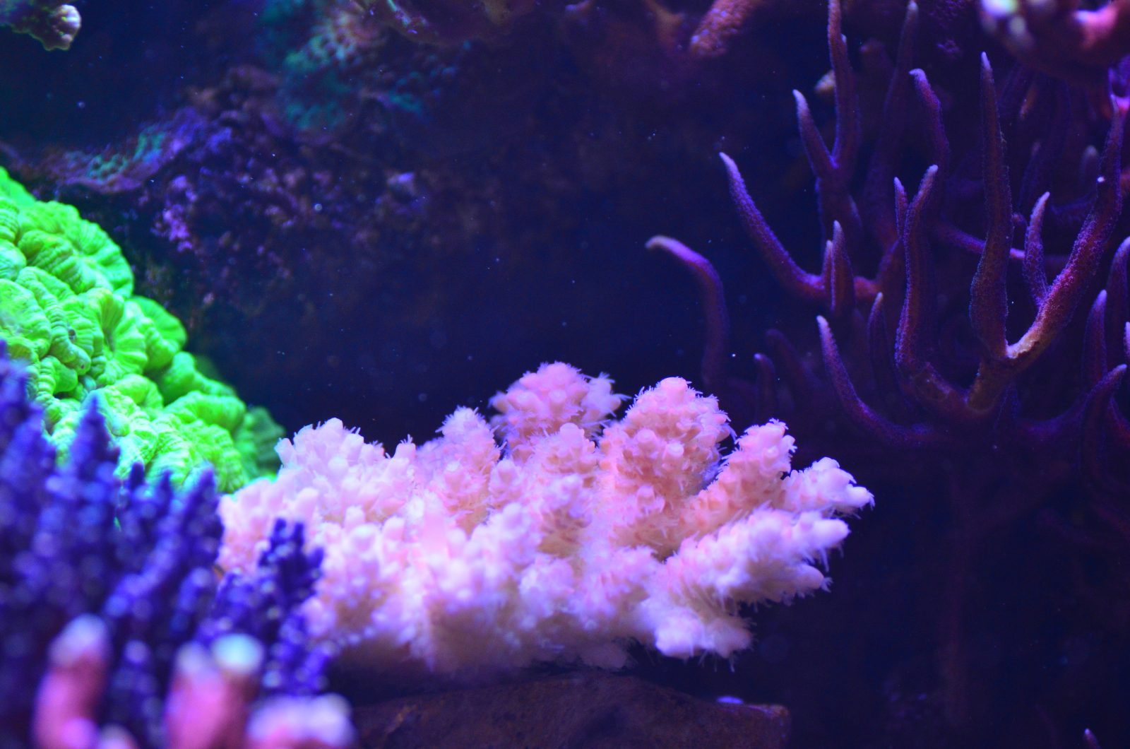 2020 top coral growing LED lights