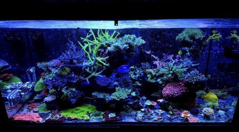 luces de acuario de arrecife de agua salada