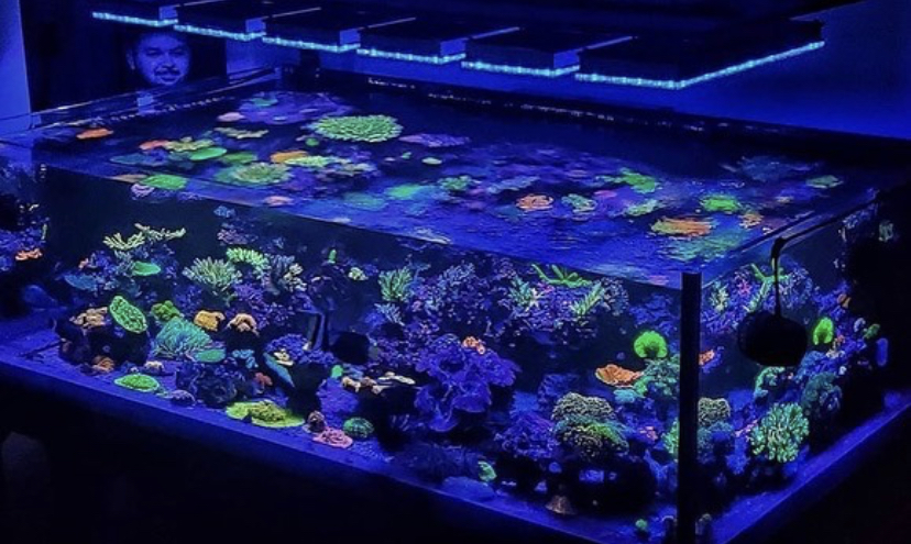 pencahayaan tangki karang berwarna-warni air dalam