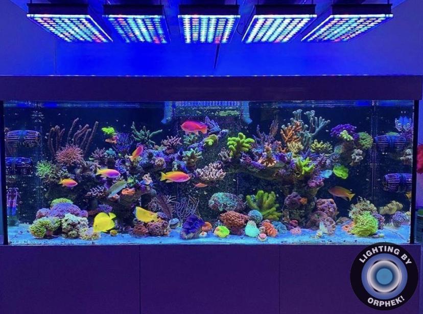 Najlepsze oświetlenie koralowców w 2020 roku