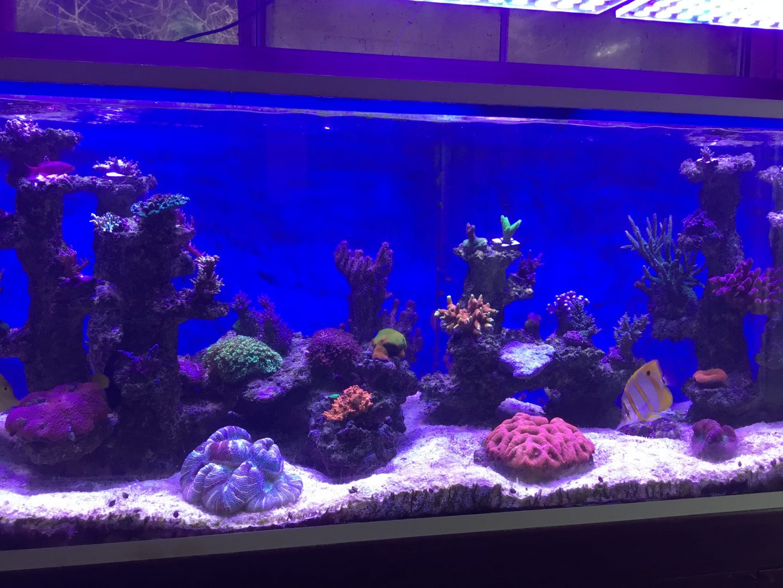 best reef coral pop LED light orphek