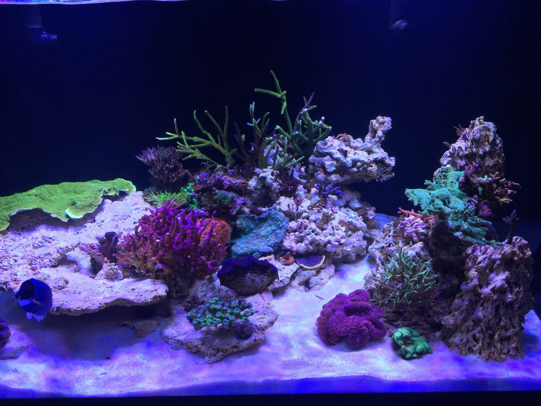 bedste korall voksende førte lys 2020